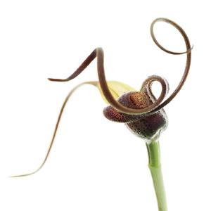 Orchideen Kopf micha pawlitzki photography